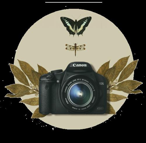photo-expertise3